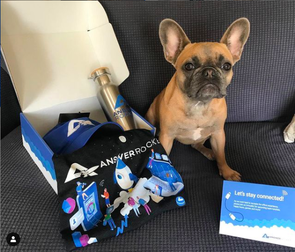 Charlie, the Frenchie, (not included in the swag package) shows off AnswerRocket merch.